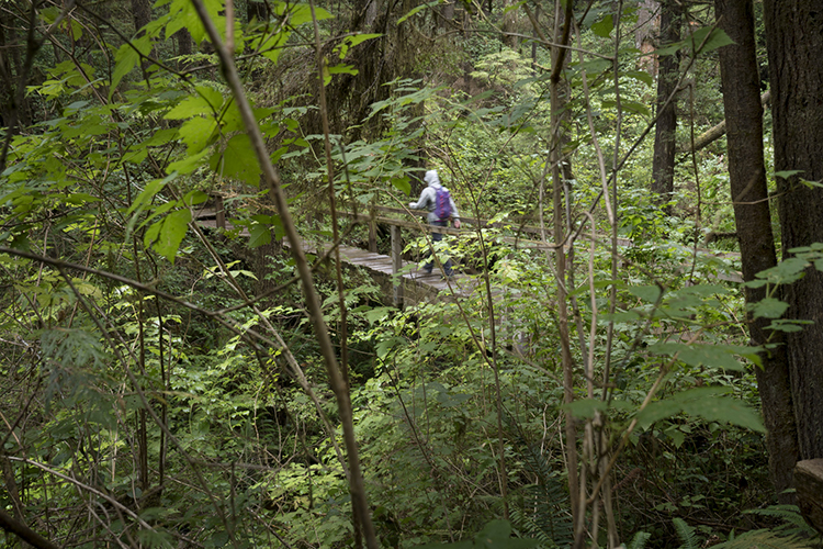 Woman walking across a small bridge in the Washington rain forest.